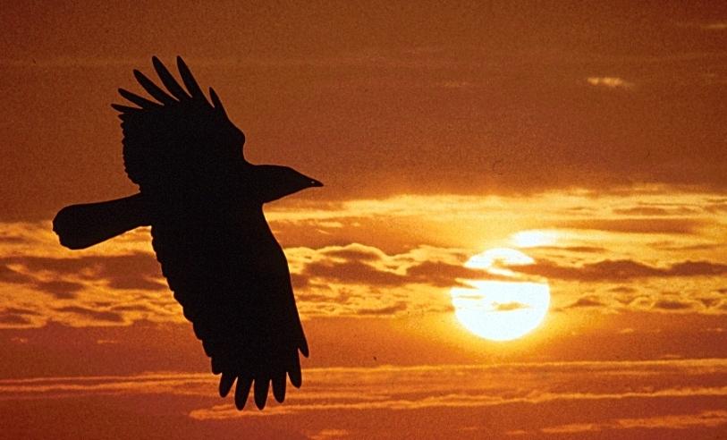 Держкіно почало фінансувати фільми «Кіборги» і «Чорний ворон» за романом Шкляра