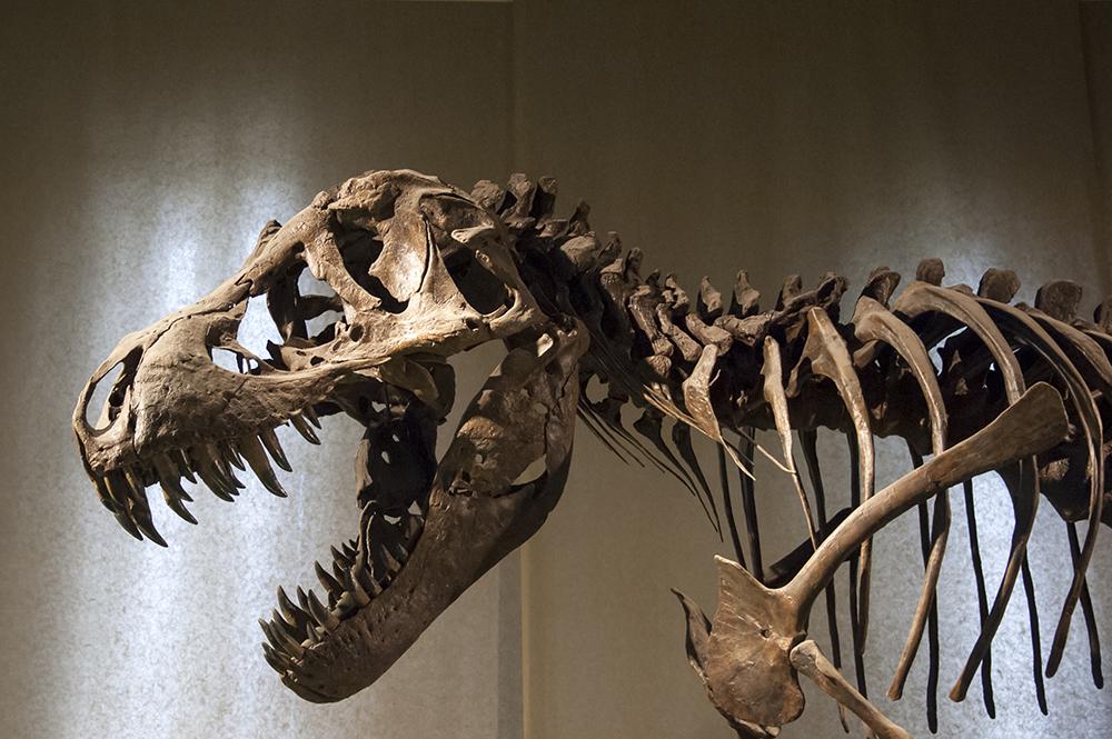 Тиранозавр не бігав, а велично ходив - науковці